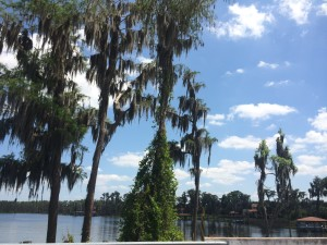 Trees graced with swaying Spanish moss on Conroy-Windermere Rd) (credit: Windermere Sun-Susan Sun Nunamaker)