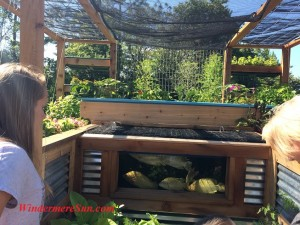 Aquaponics (credit: Windermere Sun-Susan Sun Nunamaker)