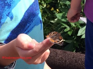 Butterfly perching on a girl's fingertip (credit: Windermere Sun-Susan Sun Nunamaker)