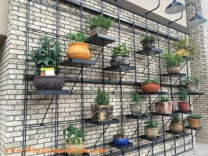 Trader Joe's-outdoor wall of plants (credit: Windermere Sun-Susan Sun Nunamaker)