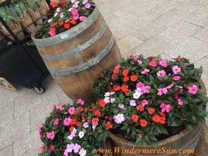 Trader Joe's-outside barrel planters (credit: Windermere Sun-Susan Sun Nunamaker)