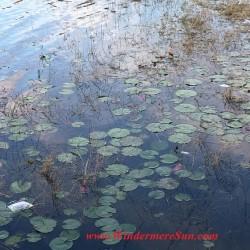 Lake of Windermere trash2 final