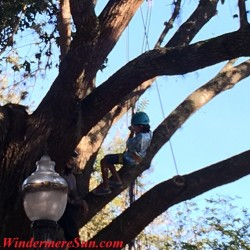 12th Annual Windermere Treebute-Kid Tree Climb (credit: Windermere Sun-Susan Sun Nunamaker)