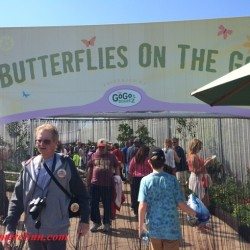 Epcot-Butterflies On The Go in 2015 (credit: Windermere Sun-Susan Sun Nunamaker)