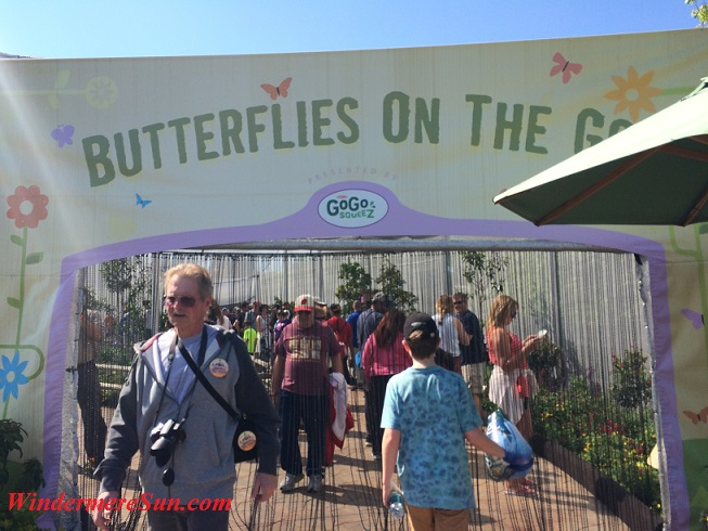 Epcot-Butterflies on the go1 final