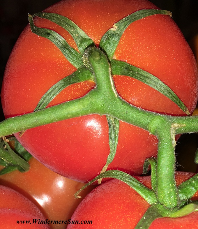 Farmer's Market-tomatoes6 beautiful cropped2 final