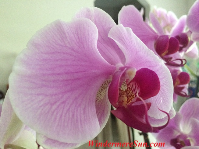 Orchids137 final