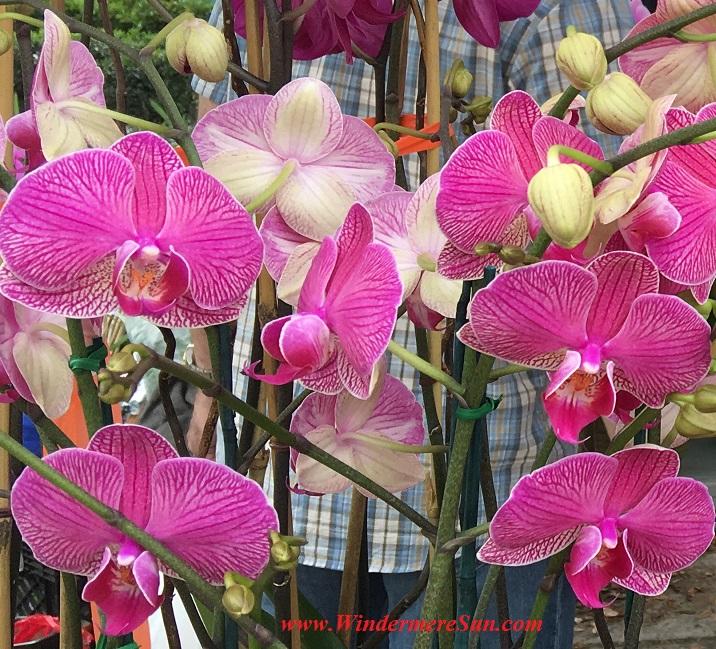 WinterGardenFarmer'sMarket-Orchids7 cropped6 final
