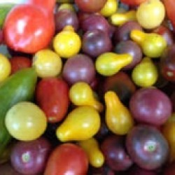 Assorted heirloom and low acid cherry tomatoes (credit: farmfreshdirect2u.com)
