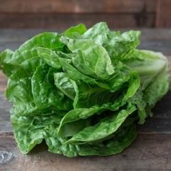 Organic Romaine lettuce (credit: farmfreshdirect2u.com)