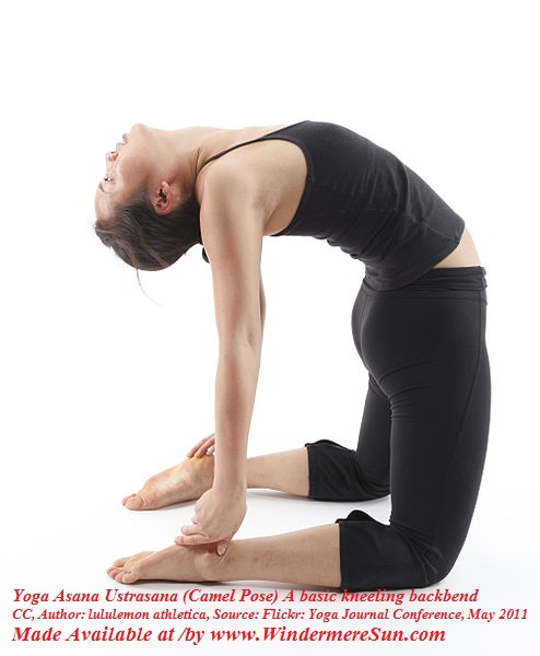 Yoga Asana Ustrasana (Camel Pose) A basic kneeling backbend, CC Author Lululemon Athletica