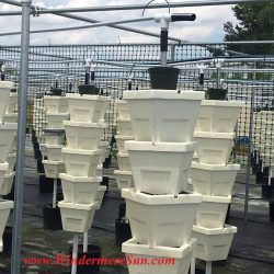 Hydroponic set-up of Bekemeyer Hydroponic Farm (1055 E. Story Road, Winter Garden, FL, 407-917-8068), photographed by Windermere Sun-Susan Sun Nunamaker