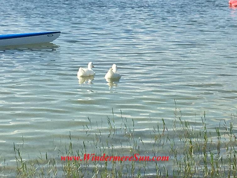 Dragon Boat Race 2016-34 2 ducks final