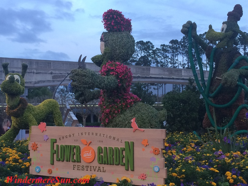 Epcot-Pluto & Mrs. Donal topiary flower & garden show final