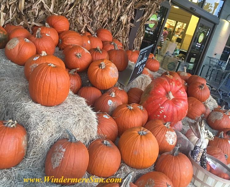pumpkin1-final
