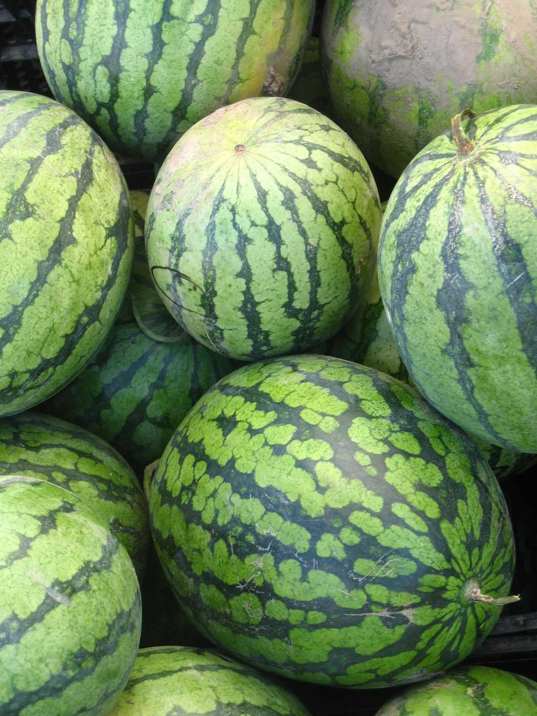 watermelon-watermelons-for-sale-(credit: alistair williamson)