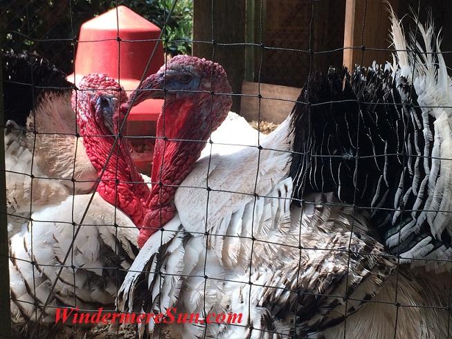 farm-market-of-lake-meadow-naturals-in-ocoee-turkey2-heart-final