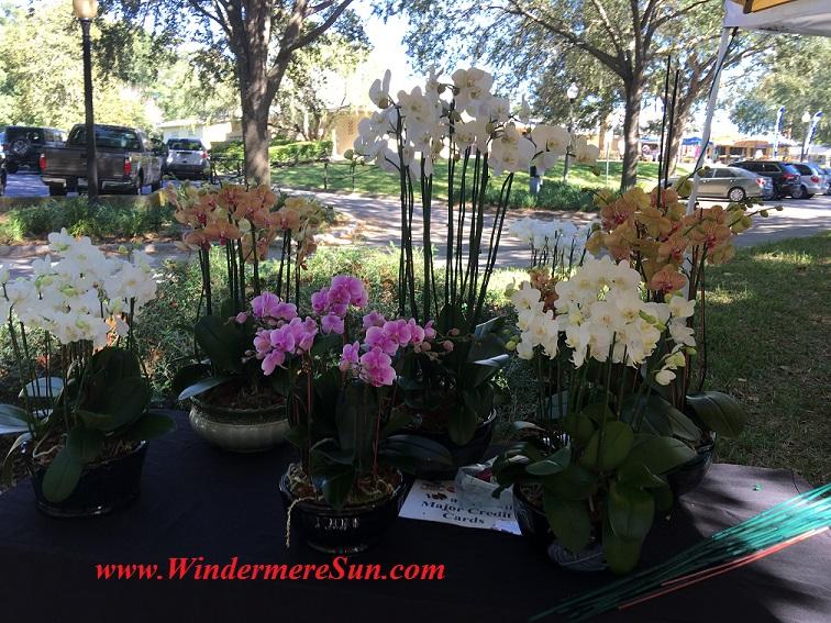 orchids2-final