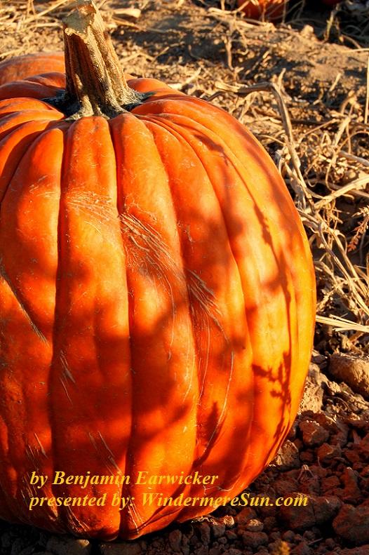 pumpkin-1325780-freeimages-by-benjamin-earwicker-final