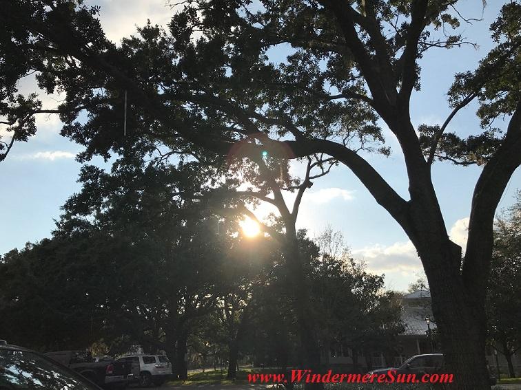 Sunshine among trees final