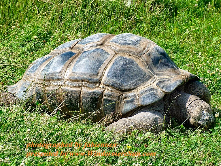 tortoise-1409929, freeimages, by fabiennew, 4-29-2017 final