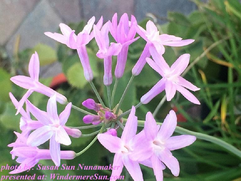 Purple flower1 final
