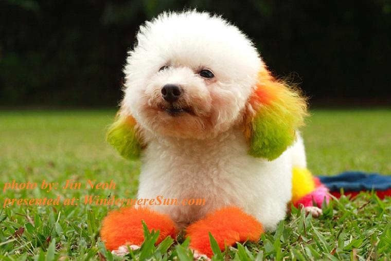 dog-1379928, by Jin Neoh final