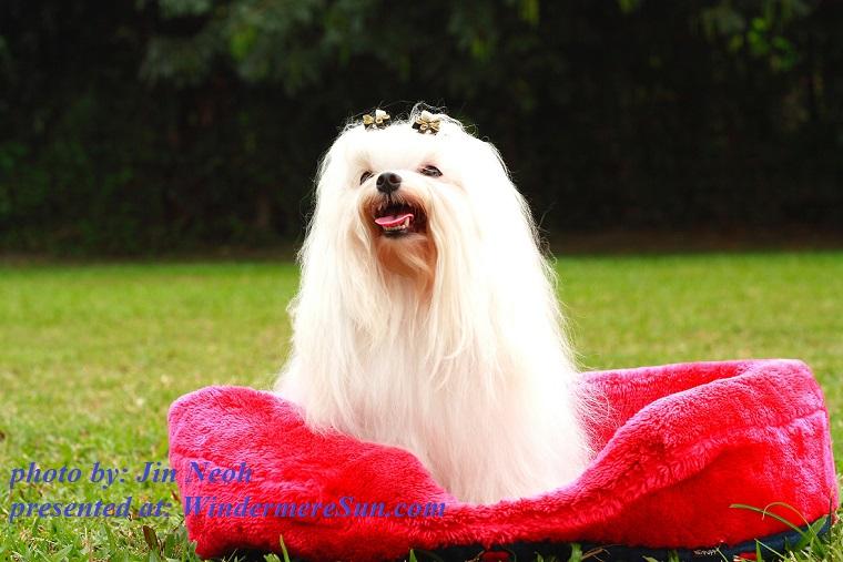 dog-1379944, by Jin Neoh final