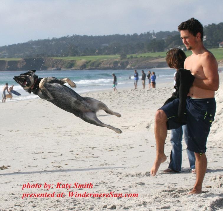dog-trix-02-1558568, by katy Smith final