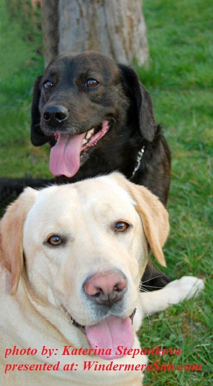 my-dogs-1247944, by Katerian Stepankova final