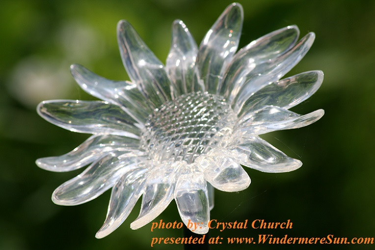 sunflower-solar-light-1162556, by Crystal Church final