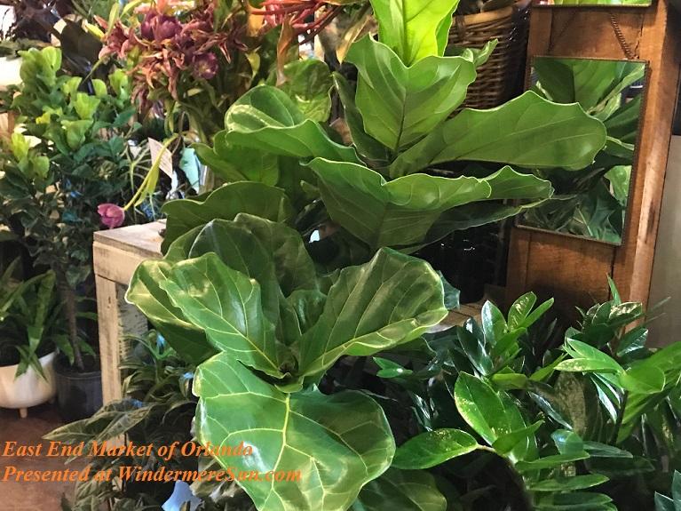 healthy plants final
