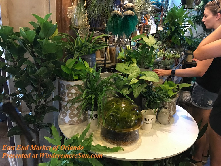 healthy plants2 final