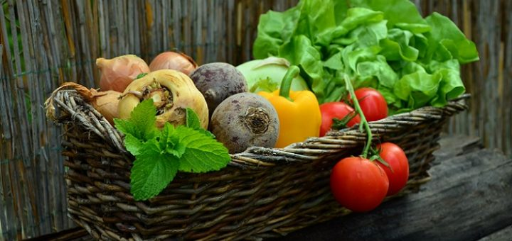 Want To Learn The Basics In Vegetable Gardening In Central Florida?