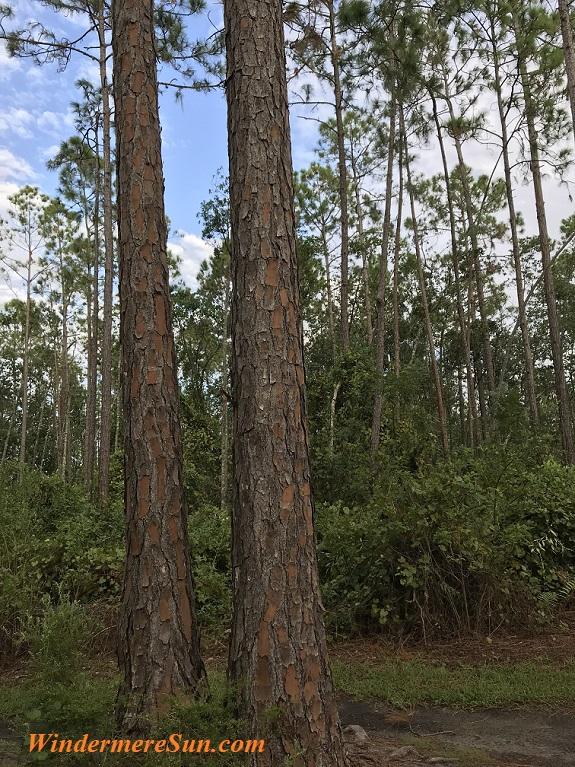 2 tree trunks 2 final