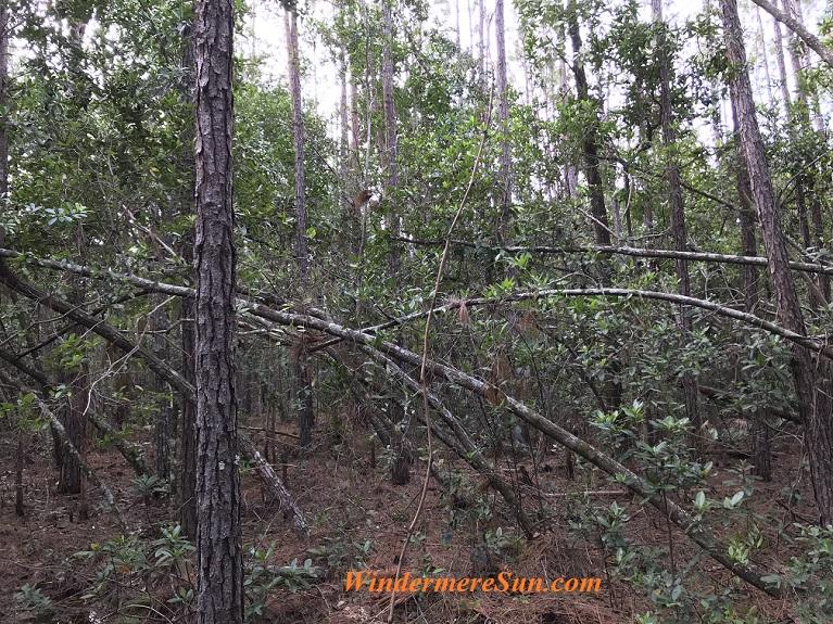 Fallen tree final