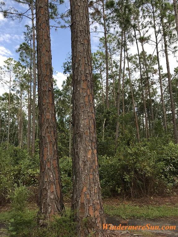 Tree Trunks final