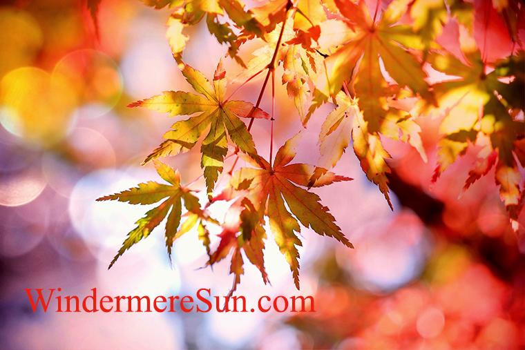 fall festival-colorful leaves-pexels-photo-355302 final