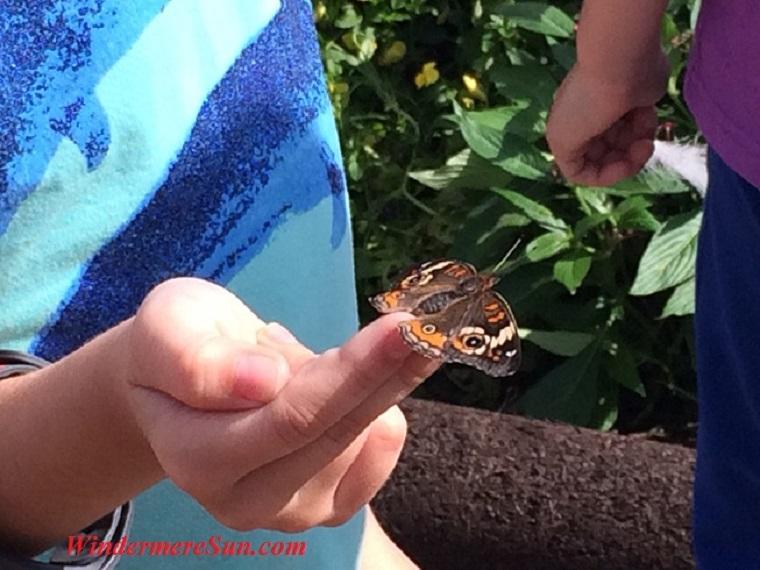 Epcot-butterfly closeup26 final