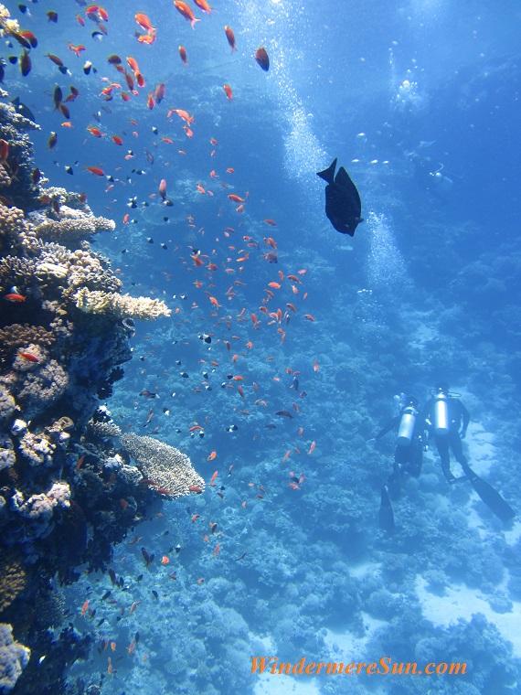 divers-underwater-ocean-swim-68767 (1) final