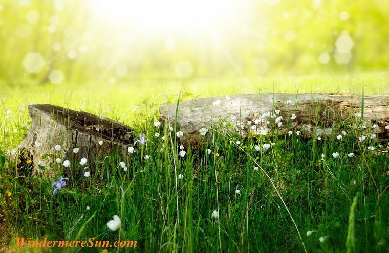 flowers-meadow-wood-forest final