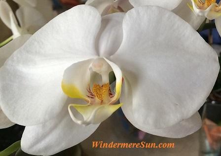 Orchids56 final