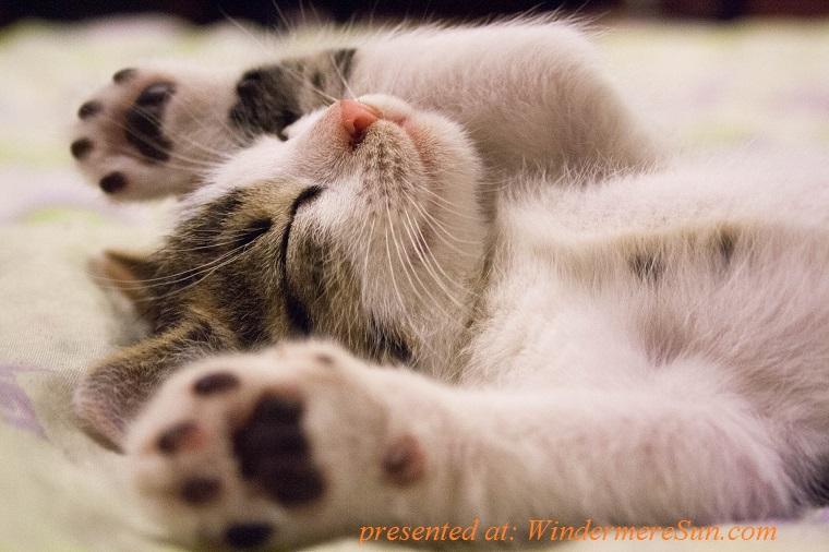 pet of 3-31-2018,cat scratchable, animal-cat-face-close-up-416160 (1)