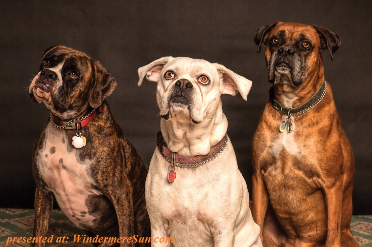 3 dogs, pexels-photo-850602 final