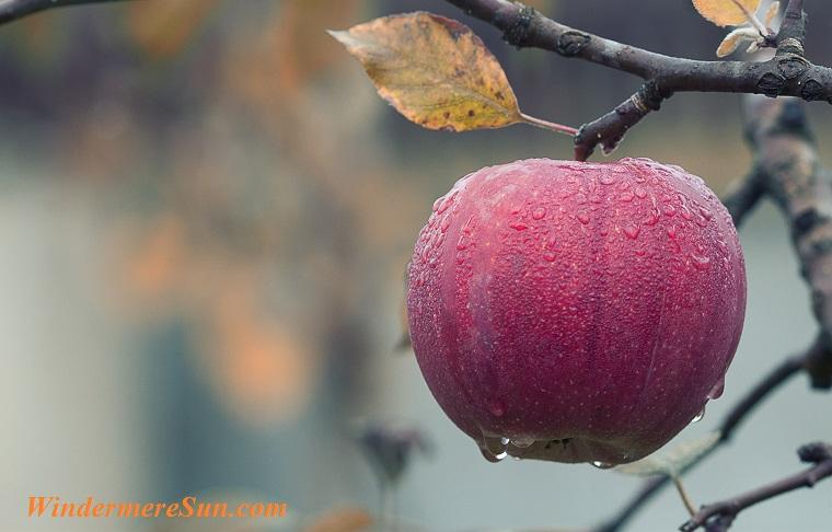 apple with dews, pexels-photo-257840 final