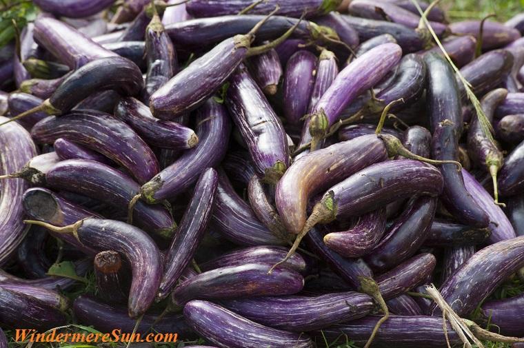 eggplants, pexels-photo-321551 final