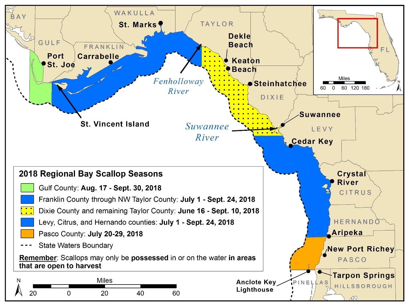 Bay Scallop Season Opens From June 16-Sep  10 In Florida In