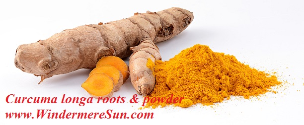 Turmeric/Curcuma longa roots & powder-great anti-inflammatory agent