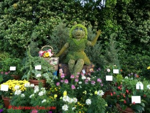 Ms. Piggy among flowers (credit: Windermere Sun-Susan Sun Nunamaker)