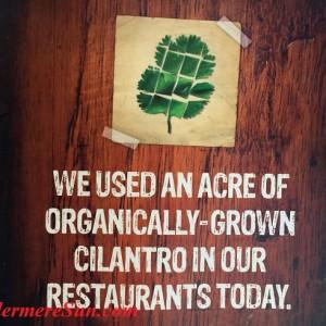 Chipotle's organic cilantro (photographed by Windermere Sun-Susan Sun Nunamaker)